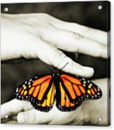 The Hands And The Butterfly Acrylic Print