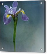 The Harlem Meer Iris Acrylic Print