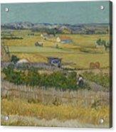 The Harvest Arles  June 1888 Vincent Van Gogh 1853  1890 Acrylic Print