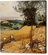 The Harvesters By Pieter Bruegel The Elder                             Acrylic Print