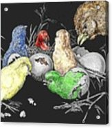 The Hatching Of Chicks. Acrylic Print