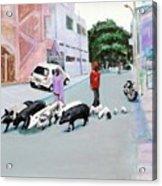 The Herd 5 - Pigs Acrylic Print