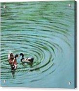 The Herd Series - Duck Meet Acrylic Print
