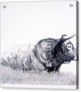 The Herdmaster Acrylic Print