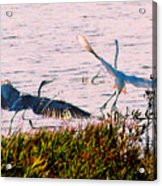 The Heron And The Egret Acrylic Print