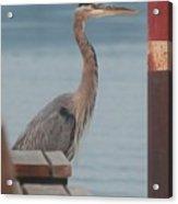 The Heron Of The Doc Acrylic Print