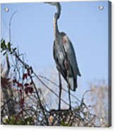 The Heron Perch Acrylic Print