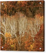 The Hills In Autumn Acrylic Print