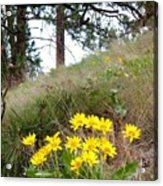 The Hillsides Are Alive Acrylic Print