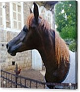 The Horse In The City Acrylic Print