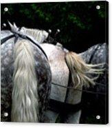 The Horses Of Mackinac Island Michigan 04 Acrylic Print