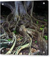 Roots Of All Evil Acrylic Print