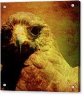 The Hunter . Portrait Of A Hawk . Texture . 40d7877 Acrylic Print