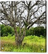 The Hunting Tree Acrylic Print