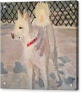 The Husky Acrylic Print by Danielle Allard