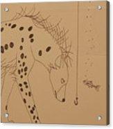 The Hyena Meets The Fish Acrylic Print