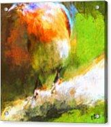 The Impressive Bluebird Acrylic Print