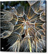 The Inner Weed Acrylic Print
