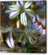 The Intransigent Beauty Of Blue Acrylic Print