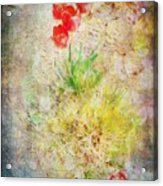 The Introverted Tulip Acrylic Print