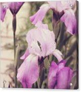 The Iris Undaunted Acrylic Print