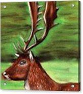 The Irish Deer Acrylic Print