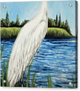 The Island's Egret Acrylic Print