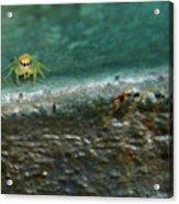 The Itsy Bitsy Spider Acrylic Print
