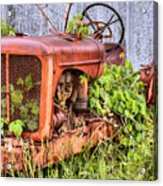 The Ivy League Acrylic Print by JC Findley