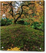 The Japanese Maple Tree In Autumn 2016 Acrylic Print