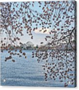 Jefferson Memorial # 5 Acrylic Print