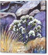 The Joshua Tree Acrylic Print