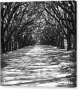 Live Oaks Lane With Shadows - Black And White Acrylic Print