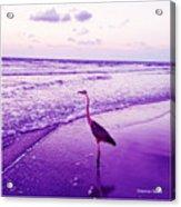 The Joy Of Ocean And Bird 2 Acrylic Print