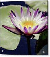 The Joy Of Purple Acrylic Print