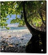 The Jungle At Onomea Bay  Acrylic Print