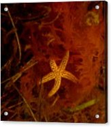 The Kelp Master Acrylic Print