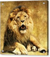 The King Acrylic Print by Angela Doelling AD DESIGN Photo and PhotoArt