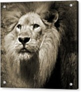 The King II Acrylic Print