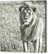 The King Stands Tall Acrylic Print