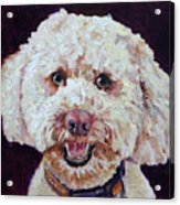 The Labradoodle Acrylic Print