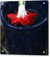 The Last Carnation Acrylic Print
