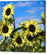 The Last Of Summer Acrylic Print