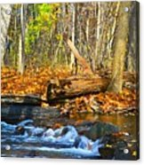 The Last Of The Fall Color Acrylic Print
