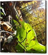 The Last Of The Green Acrylic Print