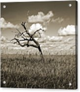 The Last One Standing - Sepia Acrylic Print