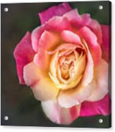 The Last Rose Of Summer, Painting Acrylic Print