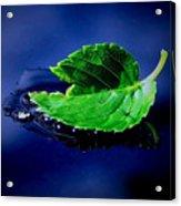 The Leaf Acrylic Print