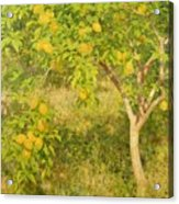 The Lemon Tree Acrylic Print