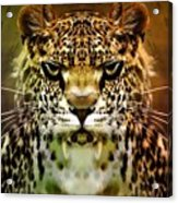 The Leopard Of The Temple  Acrylic Print
